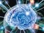 Работоспособность головного мозга